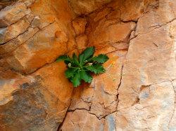 11Havgas-Gorge-Walking-Holiday-Crete11