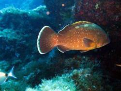 14Diving-Excursion-On-Crete-Greece-Holiday14