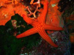 16Diving-Excursion-On-Crete-Greece-Holiday16