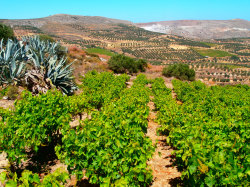 73Coocking-Course-Crete-Holiday73