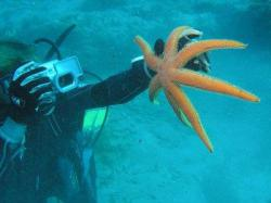 9Diving-Excursion-On-Crete-Greece-Holiday9
