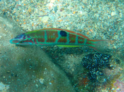 Snorkel-On-Crete-Fishes
