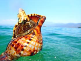 Snorkling on Crete