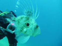 116Diving-Excursion-On-Crete-Greece-Holiday116