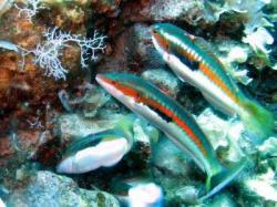 15Diving-Excursion-On-Crete-Greece-Holiday15