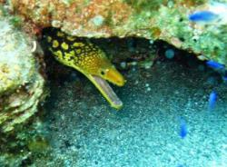 18Diving-Excursion-On-Crete-Greece-Holiday18