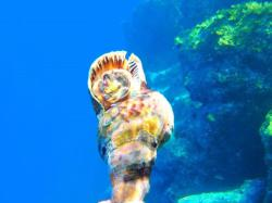 33Diving-Excursion-On-Crete-Greece-Holiday33