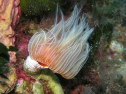 40Diving-Excursion-On-Crete-Greece-Holiday40