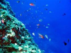 57Diving-Excursion-On-Crete-Greece-Holiday57