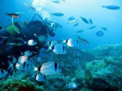 61Diving-Excursion-On-Crete-Greece-Holiday61