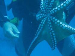 6Diving-Excursion-On-Crete-Greece-Holiday6