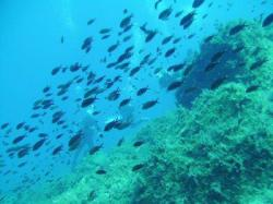 85Diving-Excursion-On-Crete-Greece-Holiday85