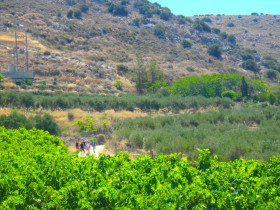 Cooking courses and workshops excursions on Crete (15)
