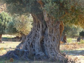 Walking and Hiking on Crete Greece (22)
